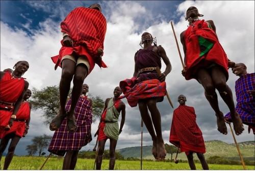 Дома у масаи строят в основном женщины. Они же во время переходов, когда не хватает вьючных животных, несут на спинах нехитрый скарб и каркасы хижин.