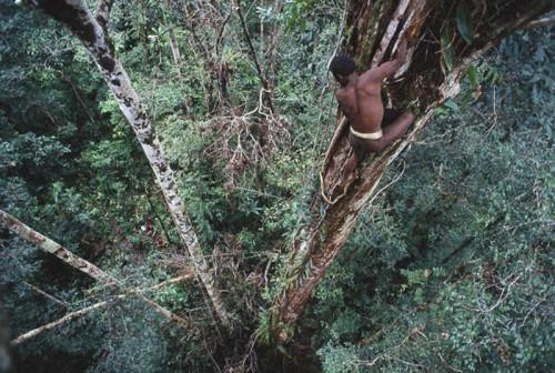 Они живут на деревьях, носят на себе лишь банановые листья, охотятся на диких кабанов и практикуют каннибализм.