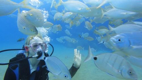 Чудесный подводный мир. А до рыбок просто так не дотронуться