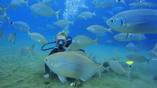 Я - рыбка. Большая рыбка. Могу сойти за свою, если хорошо замаскироваться
